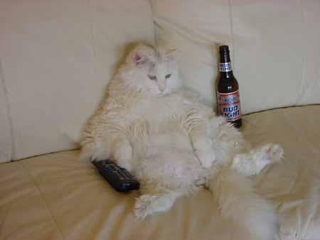 gato-viendo-tv
