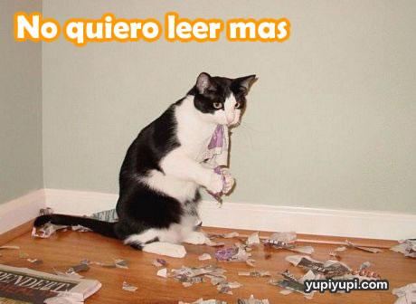 gato-rompiendo-periodico